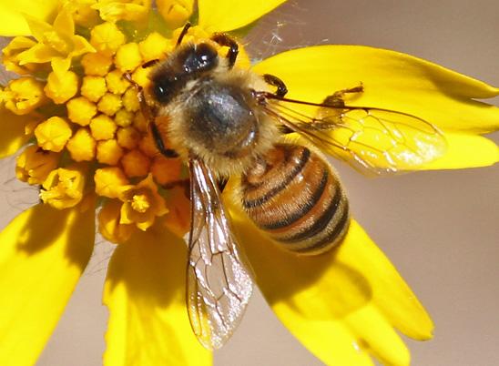 Bee&FlowerIMG_1634548